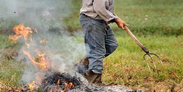 Abbruciamento residui potatura olivi nel Parco Nazionale del Gargano, il presidente Pazienza chiede alla Regione di rivedere la norma