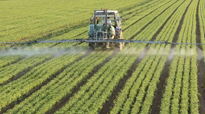 AGRICOLTURA: DALLE REGIONI VIA LIBERA AL BONUS DONNE IN CAMPO