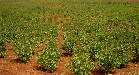 AGROALIMENTARE: RICHIESTA L'ORIGINE DELLE MATERIE PRIMA OBBLIGATORIA IN ETICHETTA