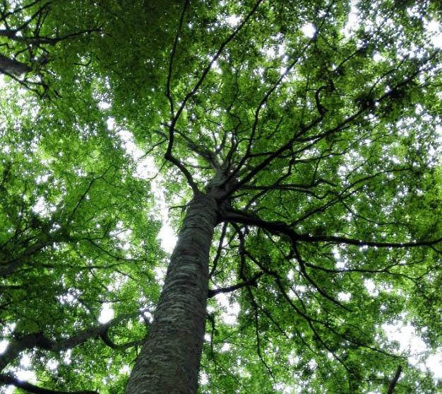 Il 7 luglio 2019 il secondo compleanno del riconoscimento UNESCO:  Foresta Umbra, banca di carbonio