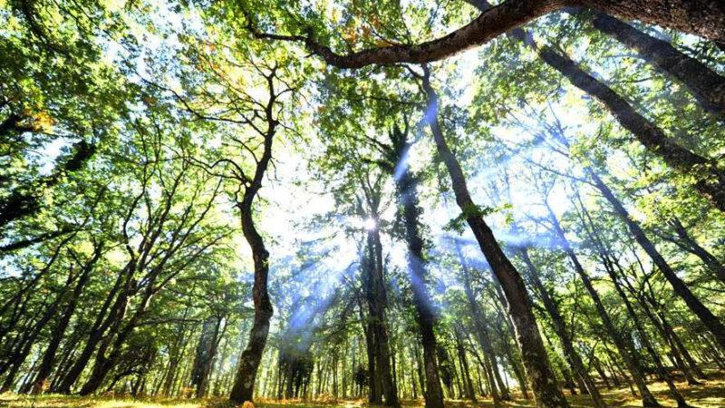 Le note di Ennio Morricone per celebrare le Faggete UNESCO della Foresta Umbra