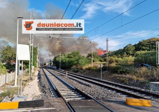 Domenica rovente a Campomarino Lido: ecco le immagini drammatiche dell'ennesimo incendio ed il video con i Canadair in azione