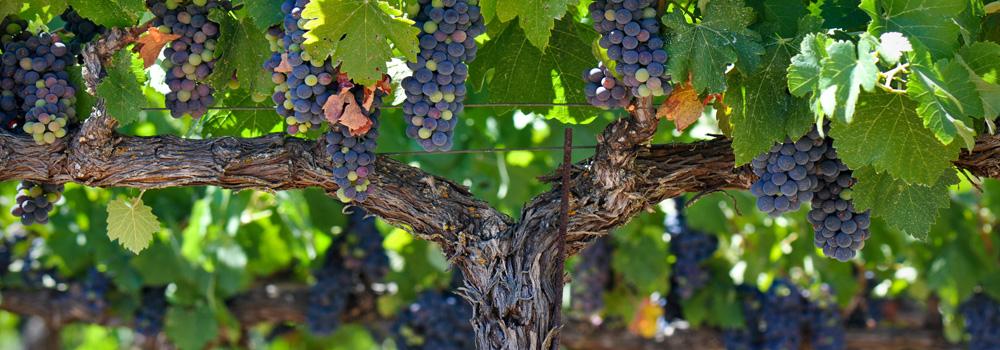 La Puglia al Vinitaly 2019, di Gioia: L'eccellenza vitivinicola in mostra a Verona dal 7 al 10 aprile